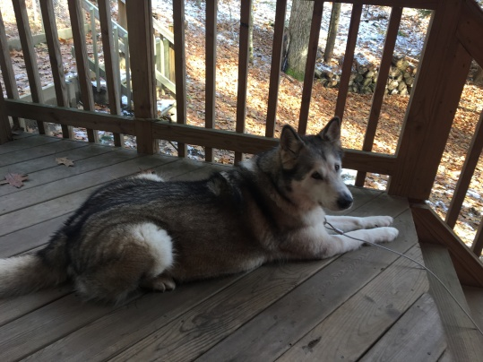 Luna loves to sit on the porch...
